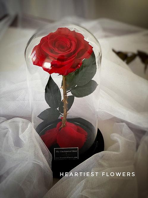 Beauty & The Beast Magic Rose