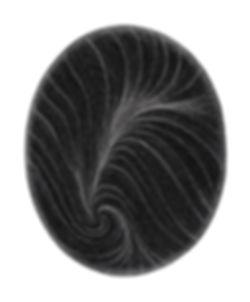 Crown of Amelia-lr-inv-web.jpg