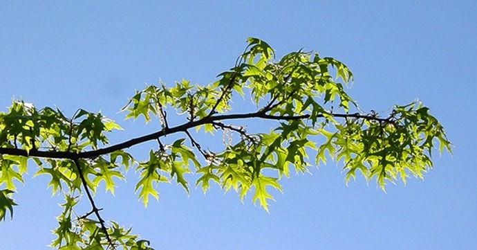 Branch_edited.jpg