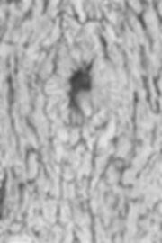 Catalpa Bark Abstractions-hr.jpg