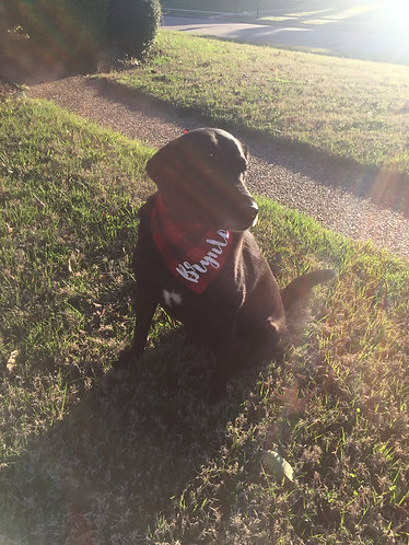 Dog Bandana -Matte/ Gloss Name