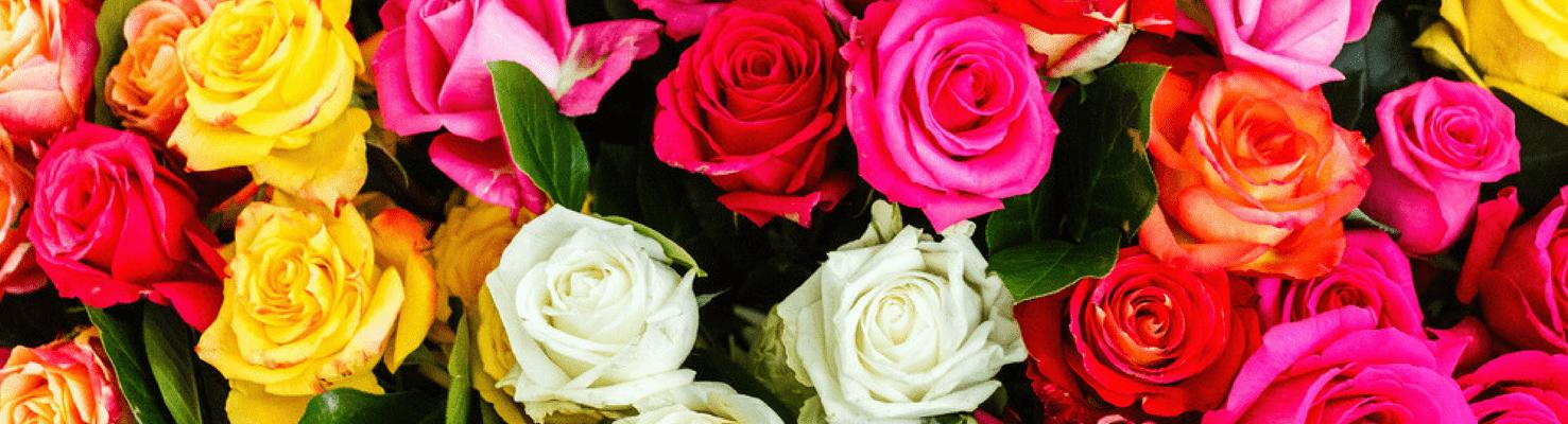 Banner-colores-rosas-min