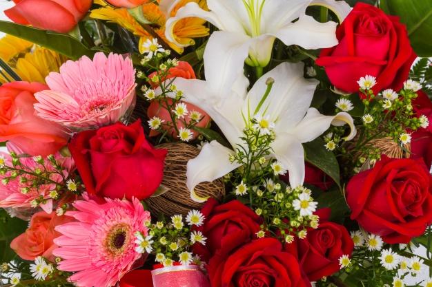 rosa-e-flores-brancas-close-up_1232-1087
