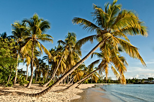 DESTINATION_MARTINIQUE_013.jpg