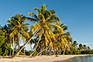 DESTINATION_MARTINIQUE_012.jpg