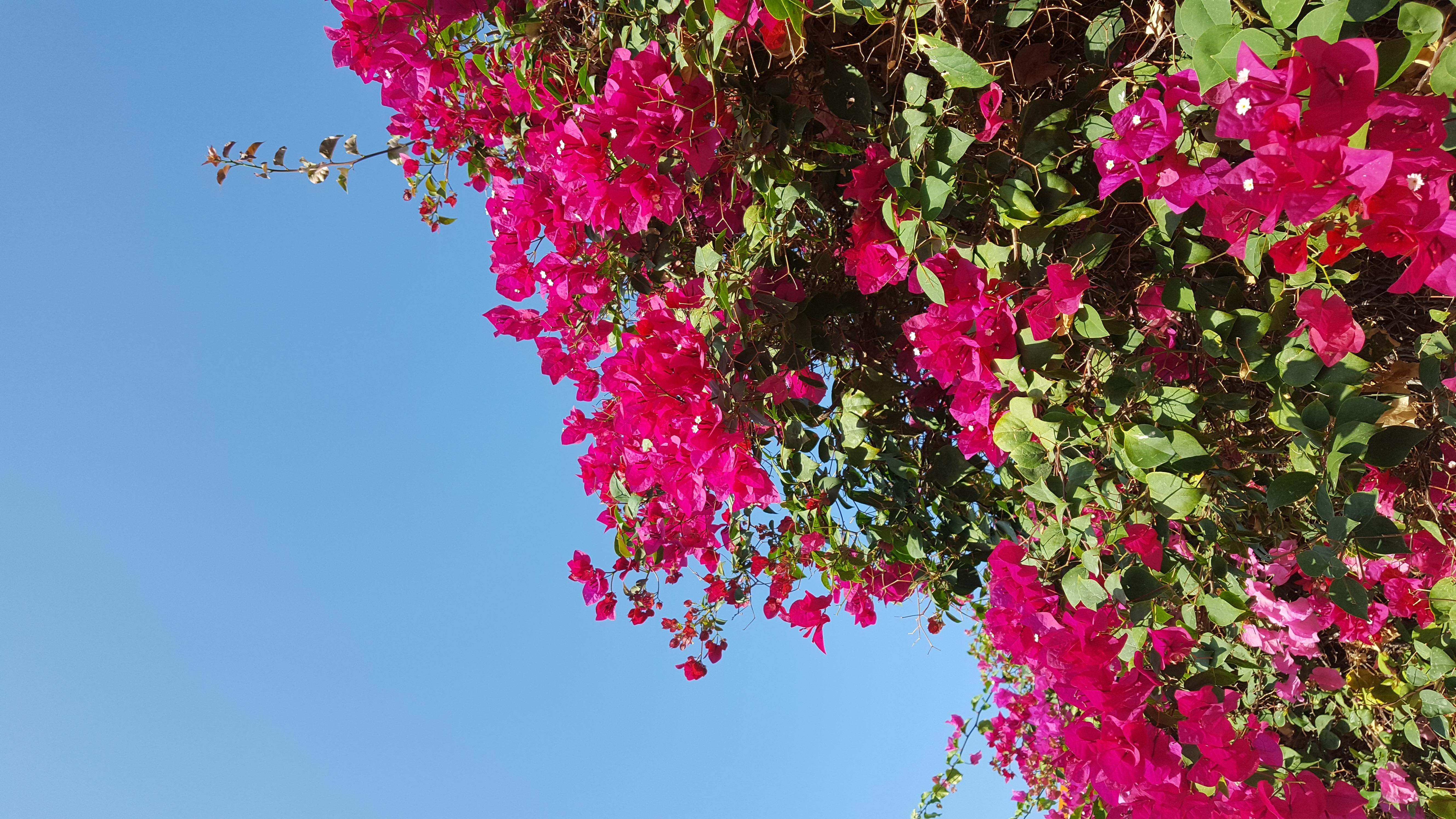 ©La joie dans une fleur
