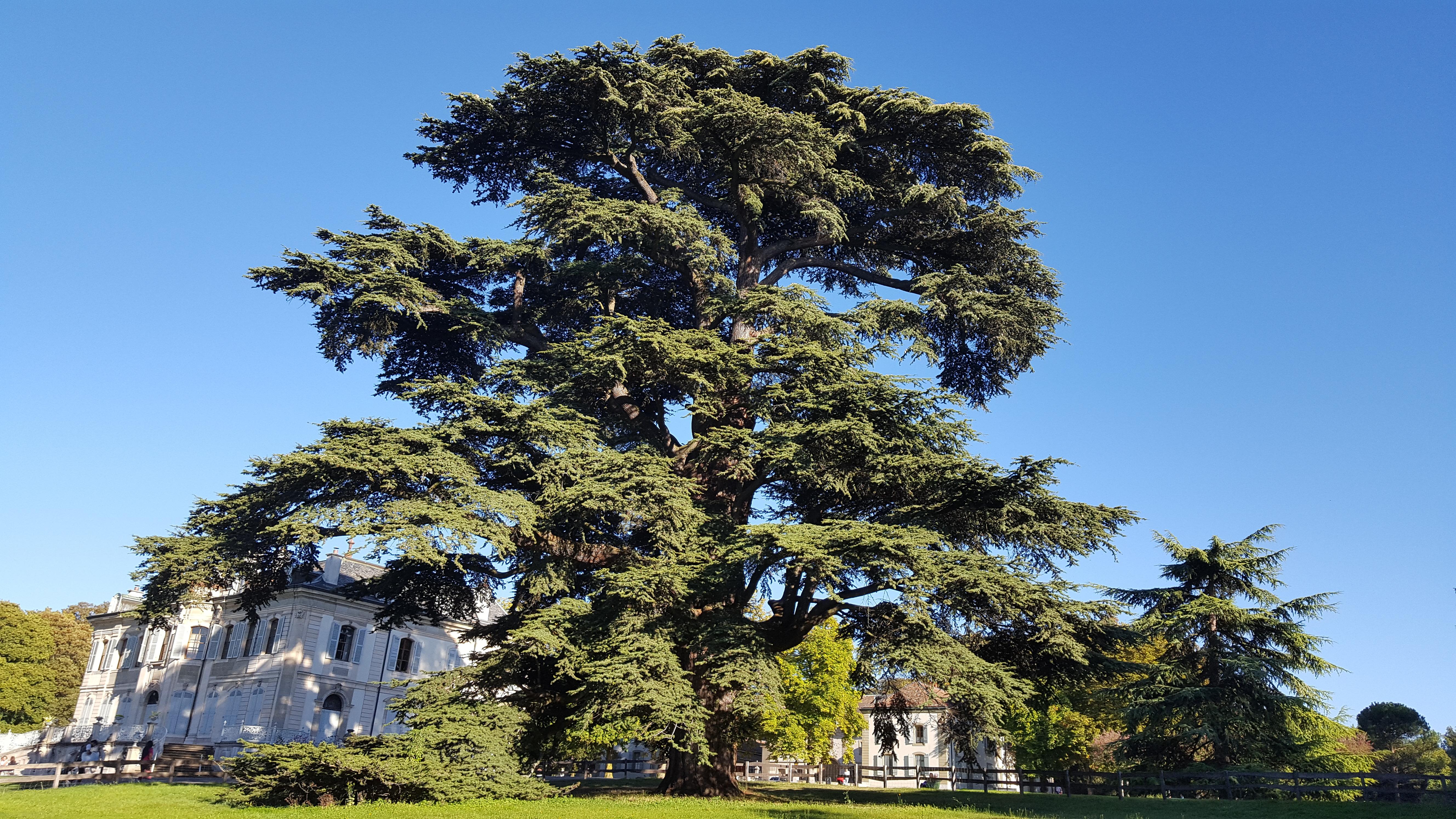 ©La force dans les racines, la flexibilité dans les branches