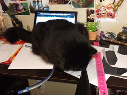 My project manager