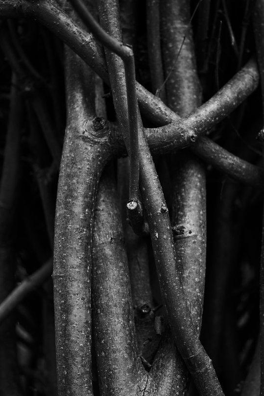 branches 2 .jpg