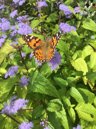 2019-04-01 Revised Pollinator Pathway Si