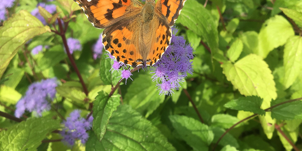Pollinator Week: How Does Pollen Travel?