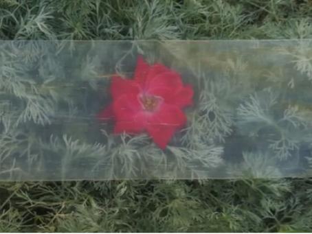 Du bois transparent