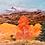 """Thumbnail: """"Colorado Aspen Fire"""""""