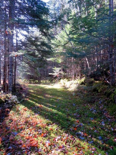 forest trail at Blackbird Retreat Cape Breton