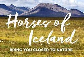 Horses_of_Iceland_1.jpeg