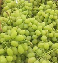 Thompson Grape