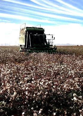 Cotton -6