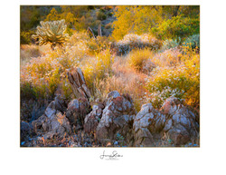 Desert Cactus Rock Painting
