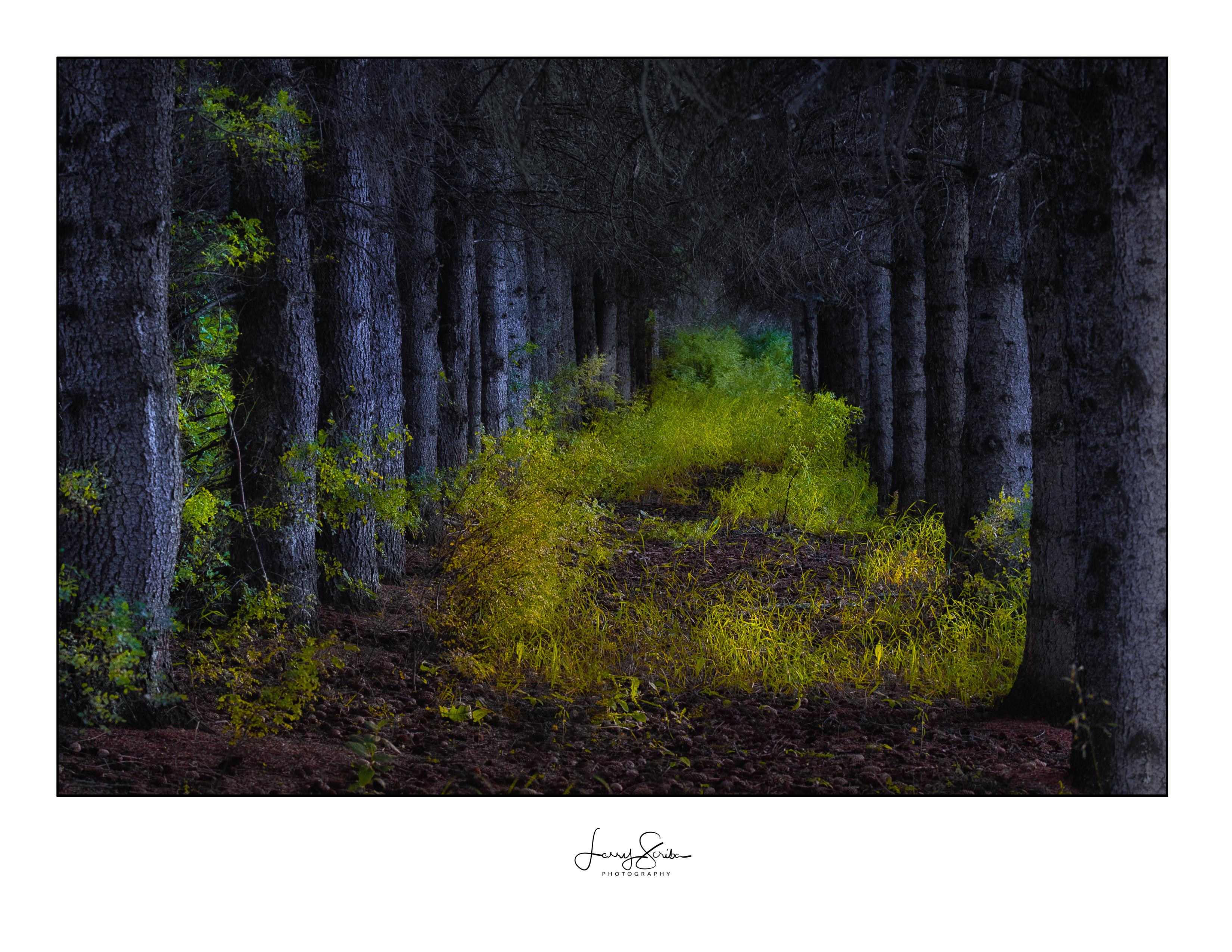Kakut Lake Trees