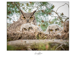 I Can See You (Owls)