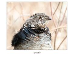 Partridge Profile