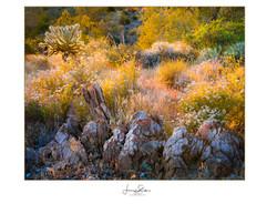 Rockin Desert Sunset