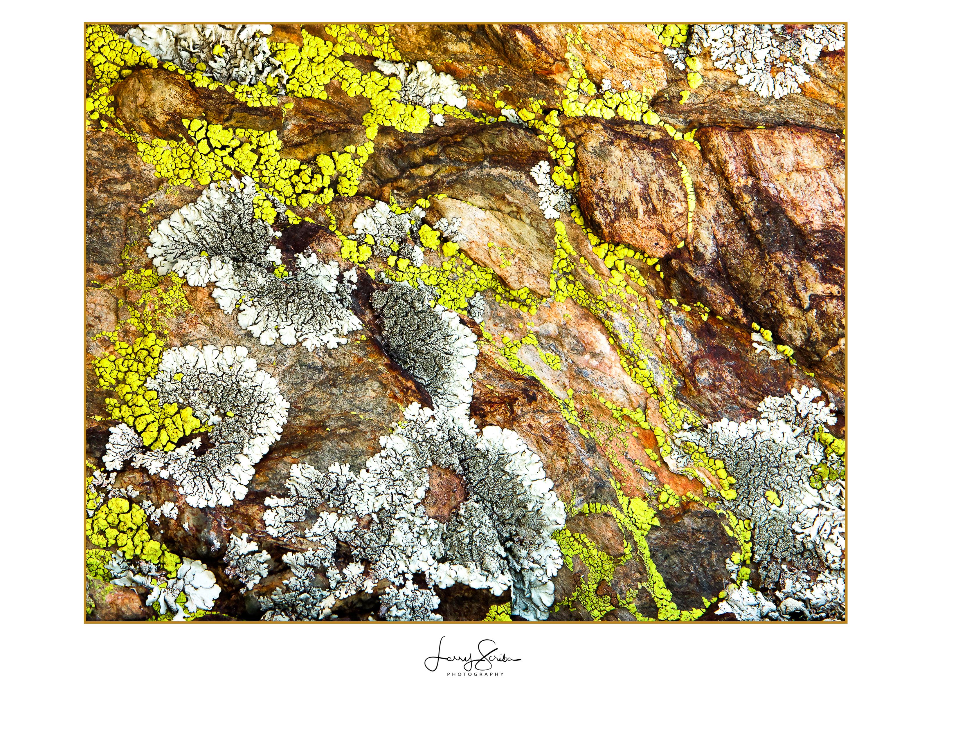 Rocks & Lichen