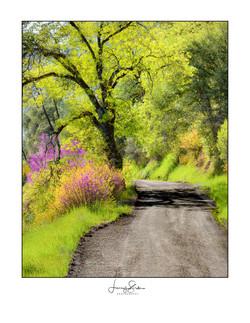 California Backroads