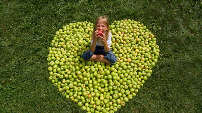 Apple-harvest-345972.jpg