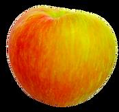 honeycrisp-1812679_1280.png
