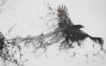 Bird - Flying Black Raven.jpg