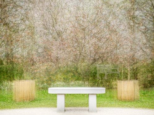 Sakura Friendship Garden