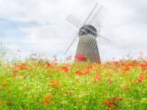 Wildflowers and Windmill