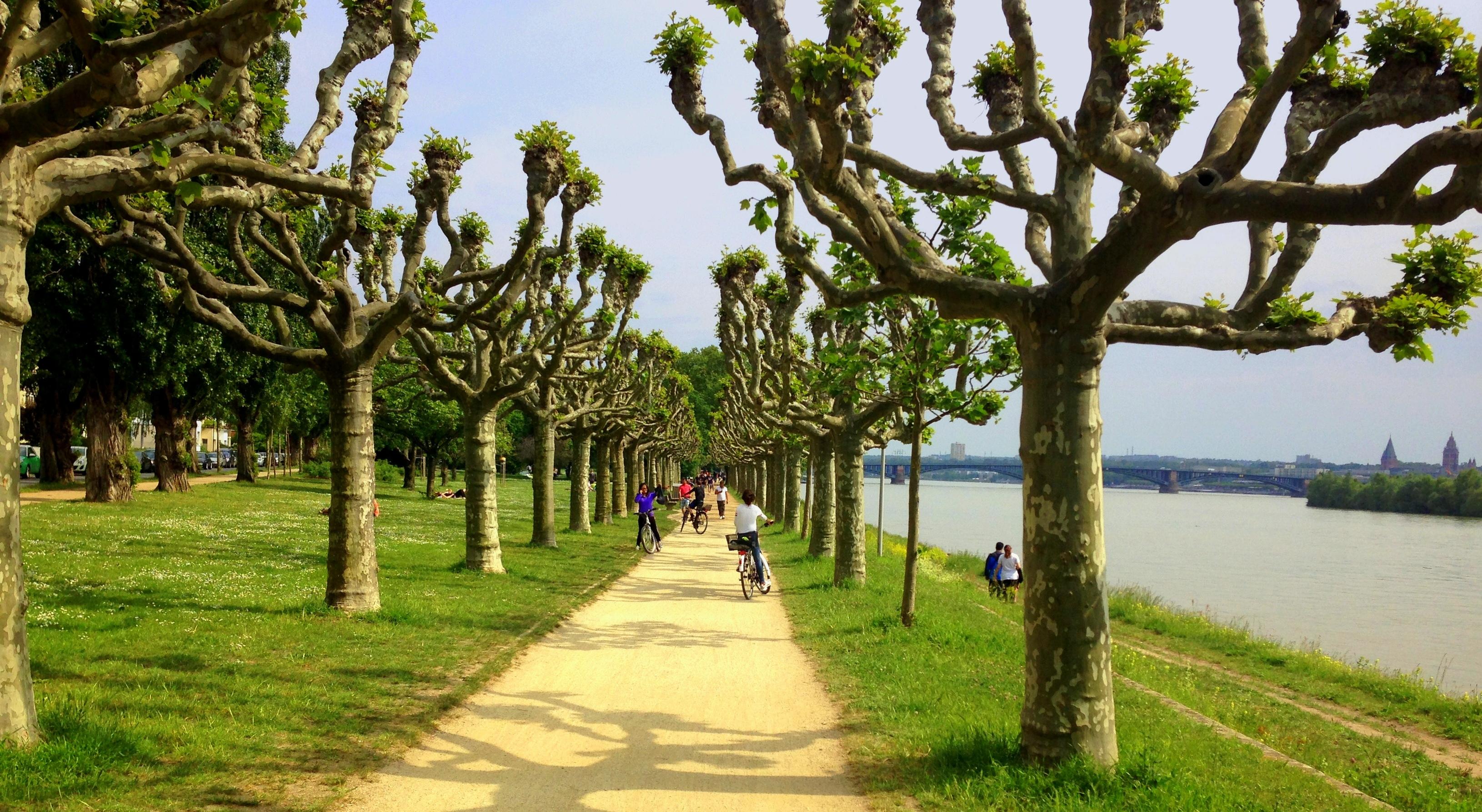 Rhine riverbank near Mainz
