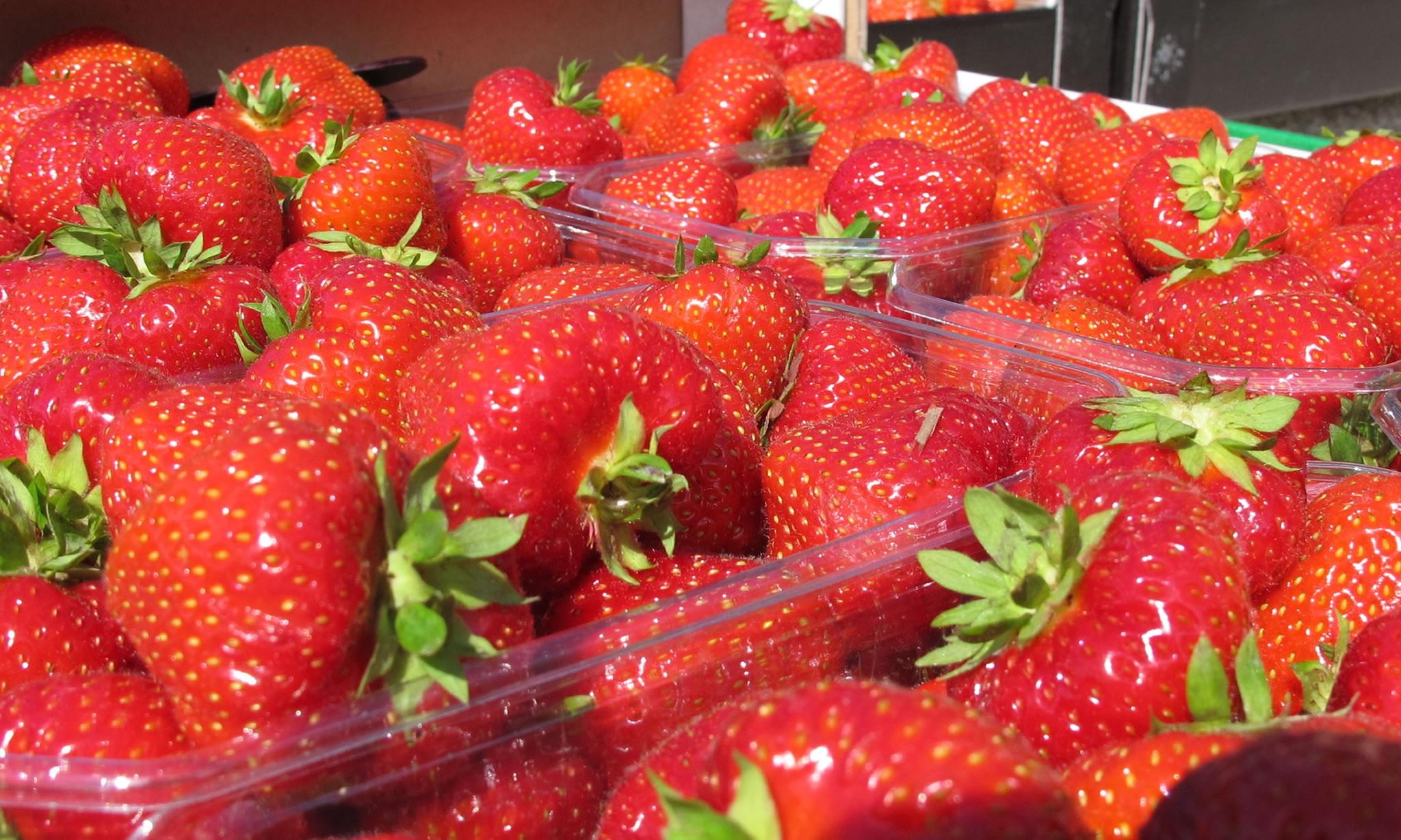 Strawberry season at Villa Orchard