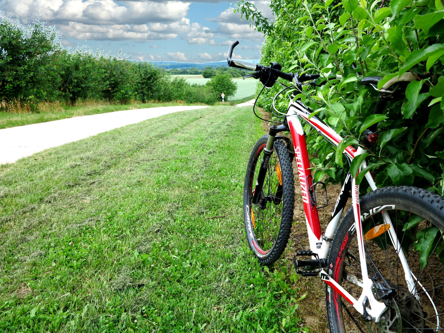 Bike trail through orchards