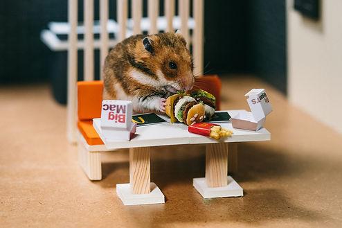 McDonalds_Hamster_Stills.jpg