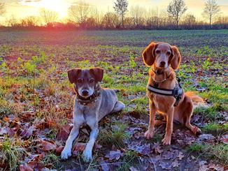 Hundecoaching.jpg