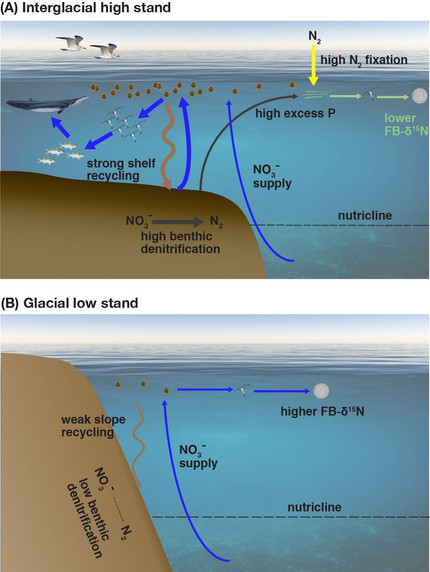 Less biologically dynamic ocean margins during the Ice Ages