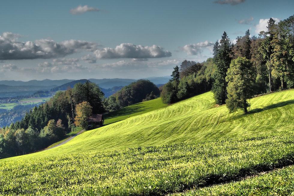 meadow-4042884_1920.jpg