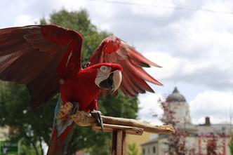FM_parrot.jpg