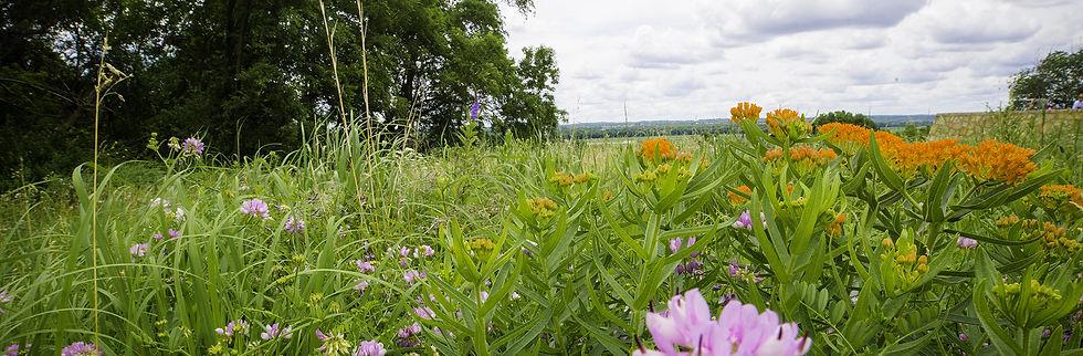 Bloomington_wild flowers1.jpg
