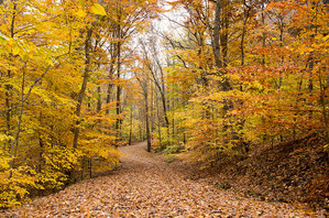 Fall time_Brown County Indiana.jpg