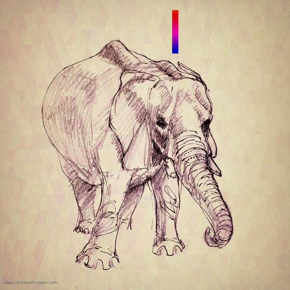 Carlos_Ruiz_Brussain_Elephant_1080_H.jpg