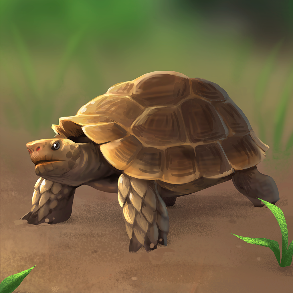 Encyclopedia_Image_AsianForestTortoise.p
