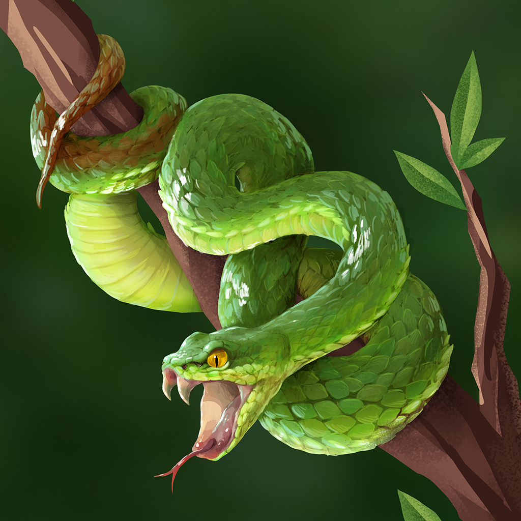 Encyclopedia_Image__WhiteLippedPitViper.