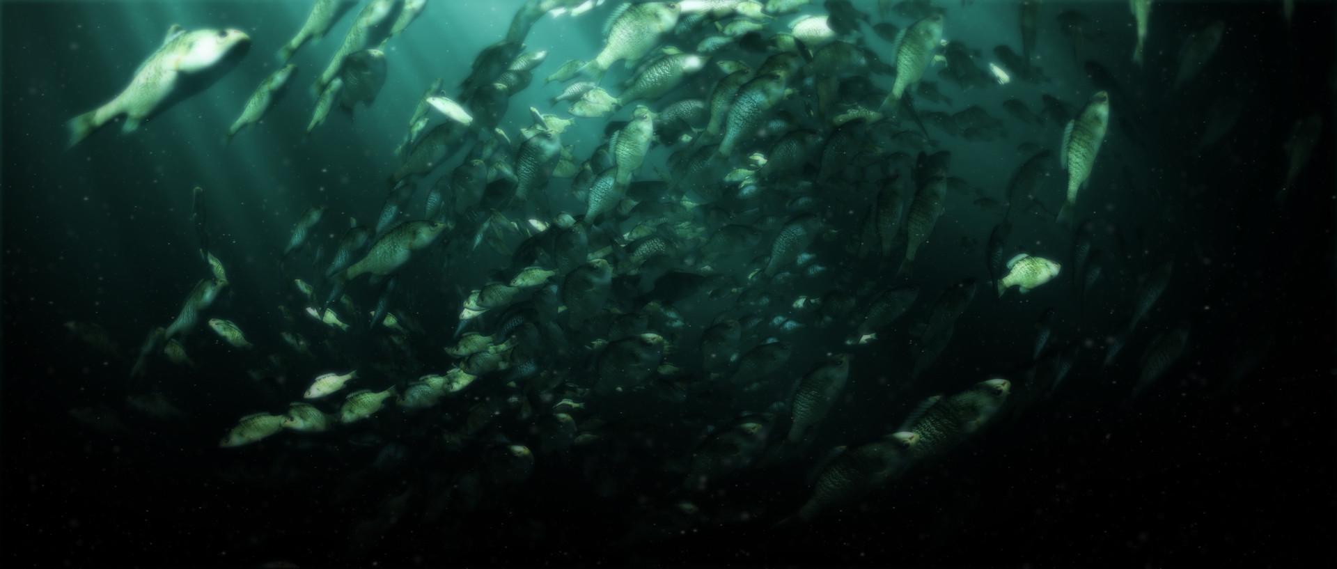 fish_8k.jpg