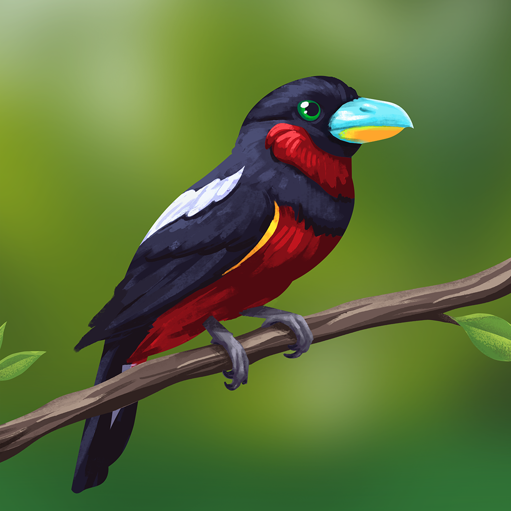 Encyclopedia_Image_BlackAndRedBroadbill.