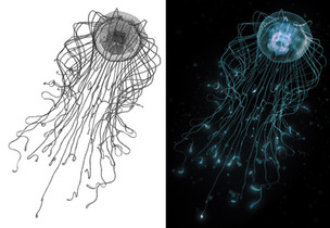 074_jellyfish_wireframe_rendered.jpg