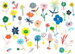 花の日    flower of the day